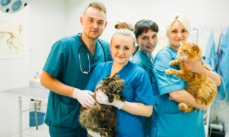 servicii veterinare, start up nation veterinar, start up nation consultanta veterinar